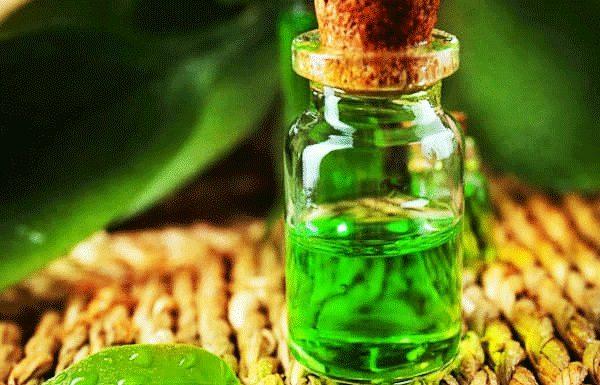 Tinh dầu trà xanh